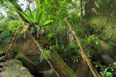 Floresta úmida Pristine Fotos de Stock Royalty Free