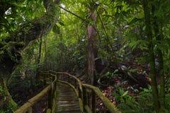 Floresta úmida profunda de 3Sudeste Asiático com vegetação densa foto de stock