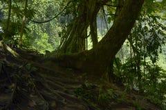 Floresta úmida profunda de 3Sudeste Asiático com vegetação densa fotografia de stock