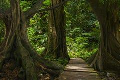 Floresta úmida profunda de 3Sudeste Asiático com vegetação densa foto de stock royalty free