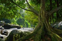 Floresta úmida profunda de 3Sudeste Asiático com vegetação densa imagem de stock