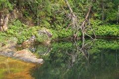 Floresta úmida Rockpool Fotografia de Stock Royalty Free