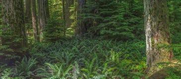 Floresta úmida temperada no Columbia Britânica fotos de stock royalty free