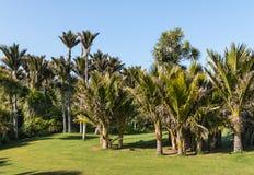 Floresta úmida tropical com palmeiras de Nikau fotos de stock royalty free