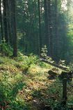 Floresta 042 foto de stock royalty free