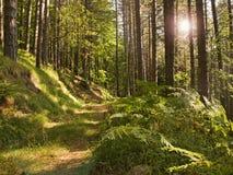 A floresta Imagens de Stock