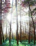 Floresta Imagens de Stock