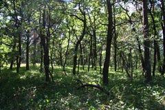 Floresta 3 Fotografia de Stock Royalty Free