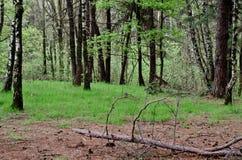 Floresta 2 Imagens de Stock