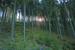 A floresta Foto de Stock Royalty Free