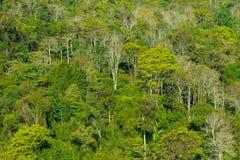 Floresta Imagens de Stock Royalty Free