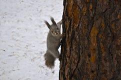 Floresta Fotos de Stock Royalty Free