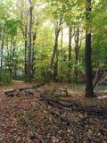 A floresta Imagens de Stock Royalty Free
