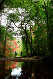 Floresta Imagem de Stock