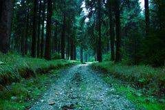 Floresta #7 Foto de Stock Royalty Free