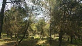 A floresta Fotografia de Stock Royalty Free