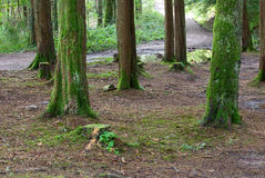 Floresta Foto de Stock