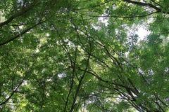 Floresta Imagem de Stock Royalty Free