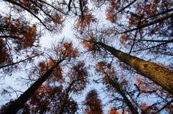 A floresta Fotografia de Stock