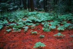 Floresta Fotos de Stock
