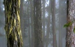 Floresta. Imagem de Stock