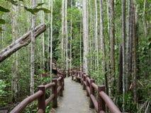 A floresta Foto de Stock