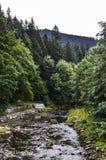 A floresta Imagem de Stock Royalty Free
