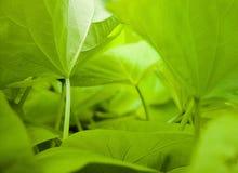A floresta abaixo Imagens de Stock