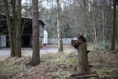 Floresta abandonada Imagem de Stock Royalty Free