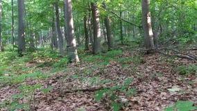 Floresta abandonada na montanha no verão filme