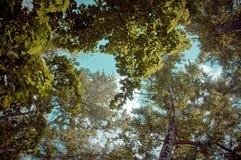 Floresta acima Fotos de Stock Royalty Free