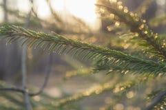 Floresta adiantada da mola Foto de Stock