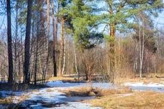 Floresta adiantada da mola fotografia de stock