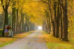 Floresta afastado no outono Imagens de Stock Royalty Free