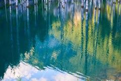A floresta afundado do lago Kaindy imagens de stock royalty free