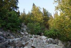 Floresta agradável do verão em Rússia Foto de Stock Royalty Free