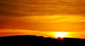 Floresta alaranjada do por do sol Fotos de Stock Royalty Free