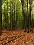 Floresta alaranjada e verde Fotos de Stock