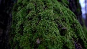 Floresta alemão video estoque