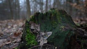 Floresta alemão vídeos de arquivo