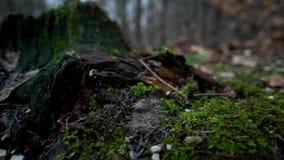 Floresta alemão filme