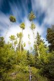 Floresta alpina com lista de nuvens Foto de Stock Royalty Free