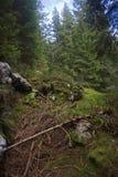 Floresta alpina, fuga de Alpe Adria imagem de stock