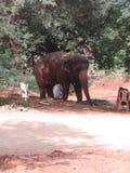 Floresta animal da selva do elefante da natureza imagens de stock
