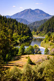 Floresta antiga Imagem de Stock Royalty Free