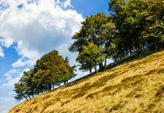 Floresta antiga da faia em um galope gramíneo fotos de stock royalty free