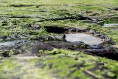 Floresta antiga hirto de medo na praia de Redcar foto de stock