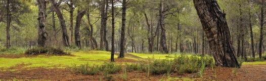 Floresta após a chuva Foto de Stock Royalty Free