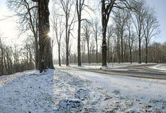 Floresta após a neve fotos de stock