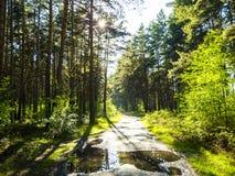 Floresta após o rine fotografia de stock royalty free